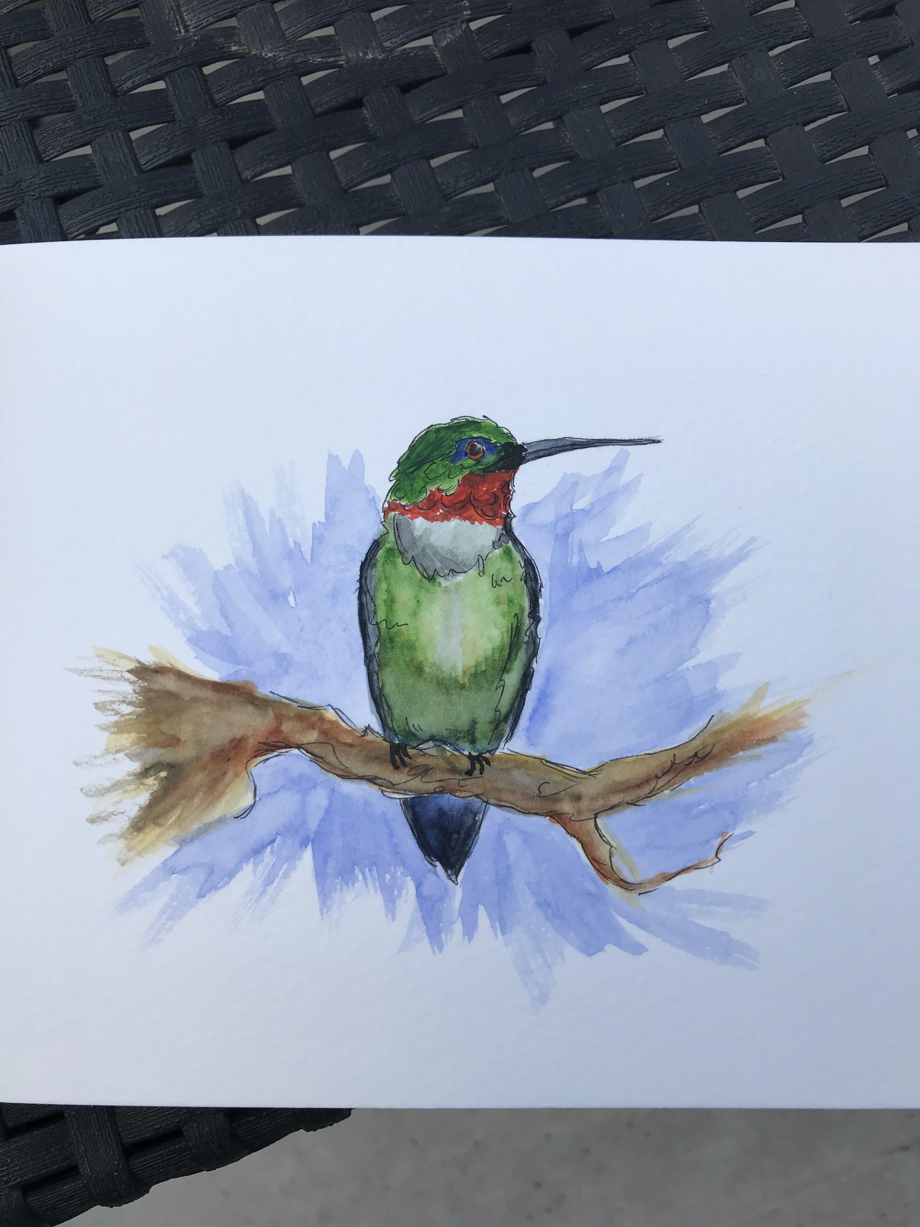 Colibri vert (aquarelle)