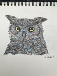 Hibou grand-duc (crayons de couleurs)