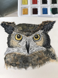 Hibou grand-duc (aquarelle)